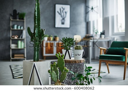 Modernly designed room with cacti decorations