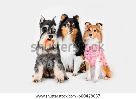 Group of breed dogs #600428057