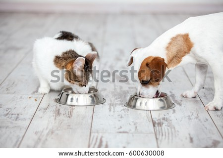 Pet eating foot. Dog and cat eats food from bowl #600630008