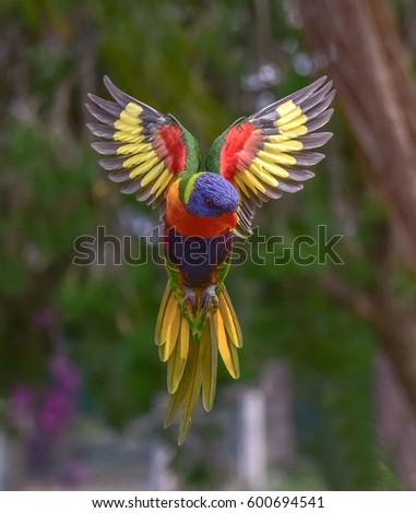 Rainbow Lori. / Kalideascope, #600694541