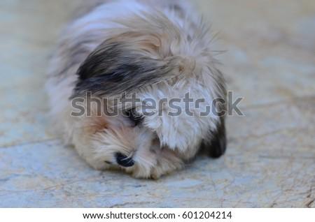 Sad dog #601204214