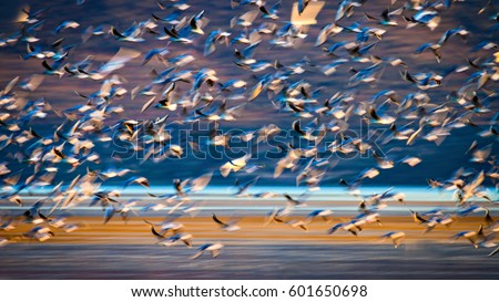Flying birds. Abstract nature. Motion blur background