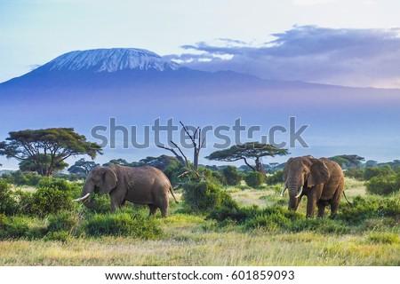 Elephants and Kilimanjaro Royalty-Free Stock Photo #601859093