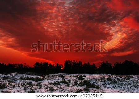 Fiery orange colorful sunset sky. Beautiful sky. winter forest at sunset. #602065115