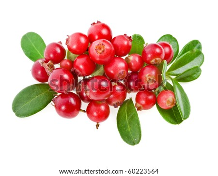 Cowberries isolated on white #60223564