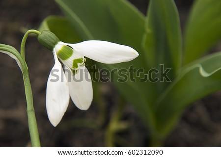 spring flowers #602312090