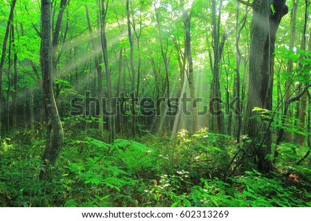 8 upper field forest rays #602313269