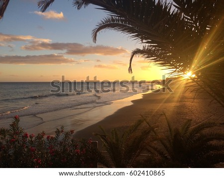 View of beach on canary island at sunset, with couple strolling in the distance. Sunbeams through palm leaves and pink flowers in the front left corner of photo. #602410865