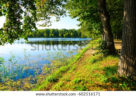 River tree by river shore #602516171