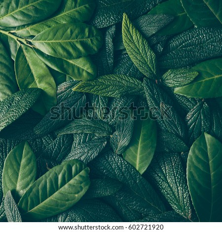 Creative layout made of green leaves. Flat lay. Nature concept #602721920