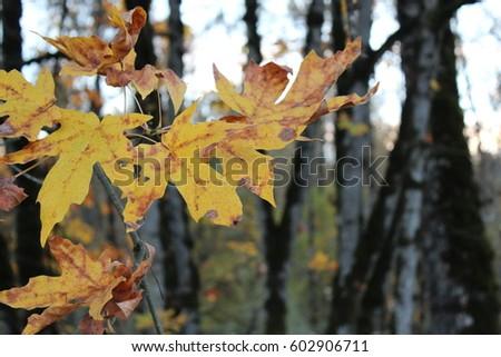 Autumn Leaves #602906711
