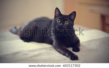 The black cat with yellow eyes lies on a sofa. #603117302