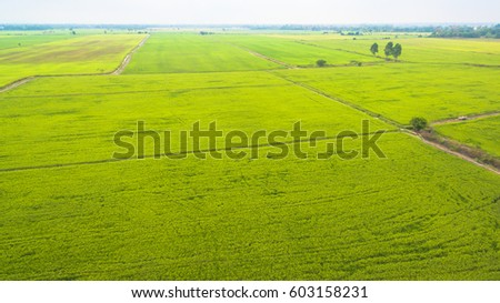 In the dry season, farmers can plant rice in some areas adjacent to the waterfront. Water from irrigation #603158231