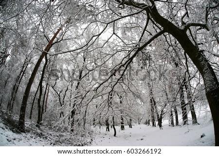 Winter #603266192