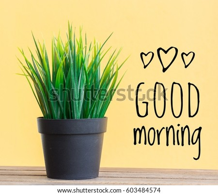 conceptual images of plant in pots and word-Good morning with yellow background