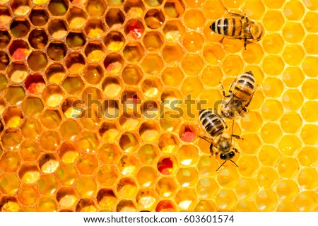 closeup of bees on honeycomb in apiary - selective focus, copy space #603601574