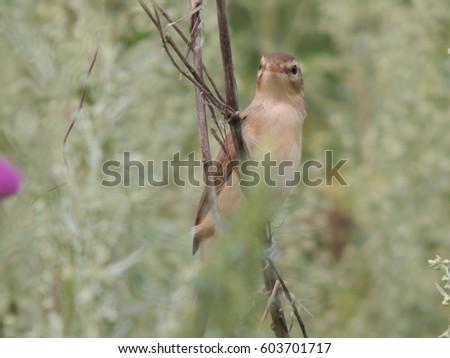 a bird in the wild  #603701717