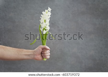 Flowers hyacinth  in man's hand #603719372