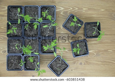 Gardening background.Young fresh seedling growing in pot #603851438