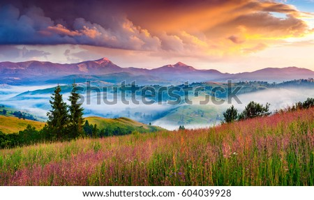 Foggy summer sunrise in the Carpathian mountains. Colorful morning scene in the mountain valley. Beauty of nature concept background. Artistic style post processed photo. #604039928