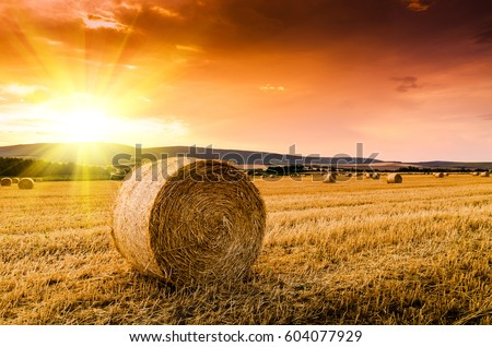 hay bales in the sunset Royalty-Free Stock Photo #604077929