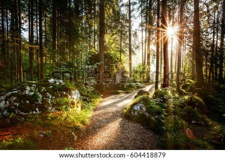 Magical scenic and pathway through woods in the morning sun. Dramatic scene and picturesque picture. Wonderful natural background. Location place Germany Alps, Europe. Explore the world's beauty. #604418879
