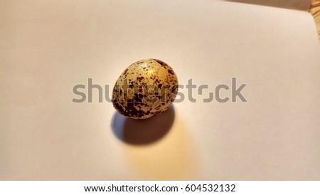quail egg #604532132