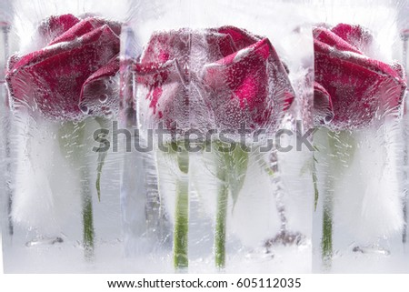 Frozen Roses Royalty-Free Stock Photo #605112035