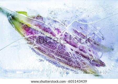 Frozen Flower Royalty-Free Stock Photo #605143439