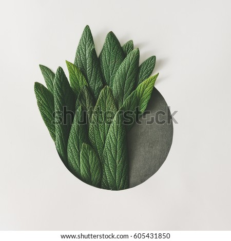 Creative minimal arrangement of green leaves. Nature concept. Flat lay. Royalty-Free Stock Photo #605431850