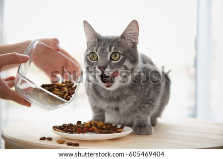 Owner feeding cute cat at home #605469404