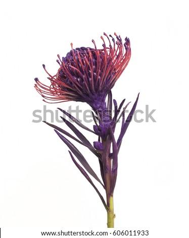 Unusual purple flower, Purple flower Royalty-Free Stock Photo #606011933