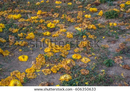 Yellow flowers fall on the ground in the morning sunlight #606350633