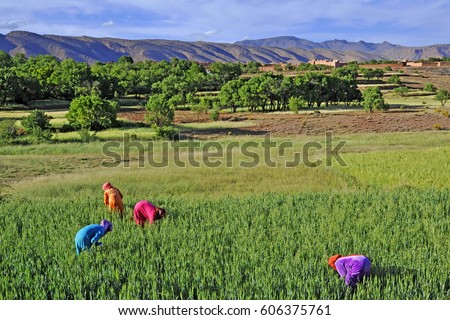 Africa- Morocco - Moroccan arab women to agricultural work in rural areas - Dades Valley, work and sexual emancipation #606375761