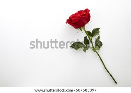 Single beautiful red rose isolated on white background Royalty-Free Stock Photo #607583897