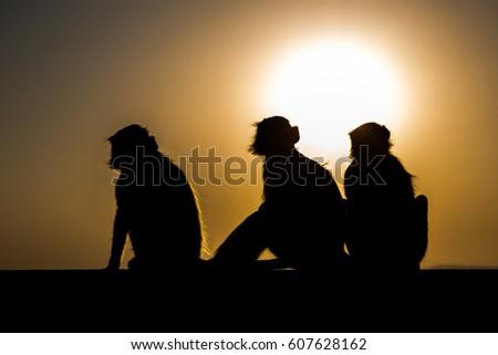 Three monkeys at sunset #607628162