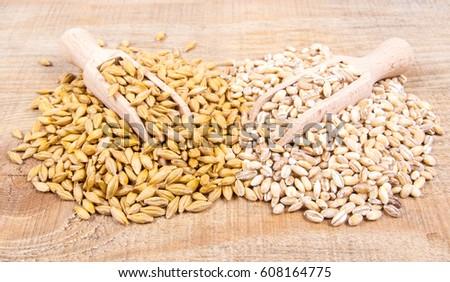 Barley seed or barley grains and pearl barley - CloseUp. #608164775