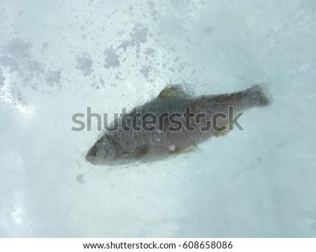 Frozen fish in ice #608658086