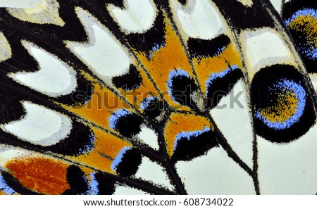 Multiple colors texture of Lime or Lemon butterfly wing surface, beautiful pattern Royalty-Free Stock Photo #608734022