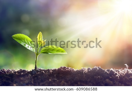 Young Plant Growing In Sunlight Royalty-Free Stock Photo #609086588