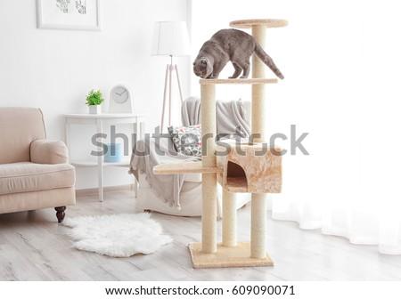 Cute funny cat playing on tree at home #609090071