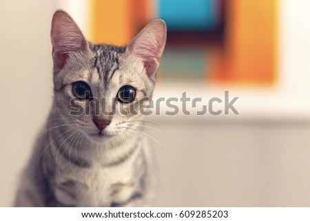 A kitten looking at camera, selective focus #609285203