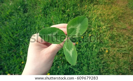 Female hand holding a leaf of white clover #609679283