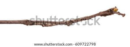 Dry lilac branches isolated on white background #609722798
