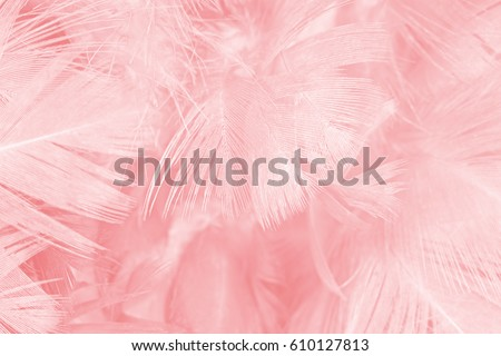 Coral Pink color feather texture background