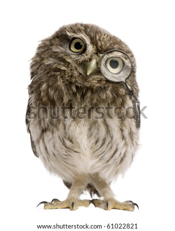 Little Owl wearing magnifying glass, 50 days old, Athene noctua, standing in front of a white background