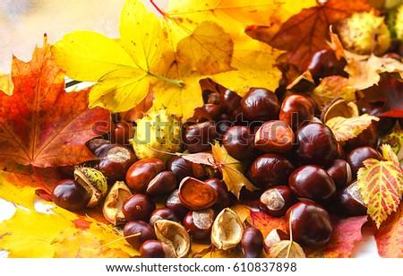Autumn chestnuts on autumn leaves #610837898