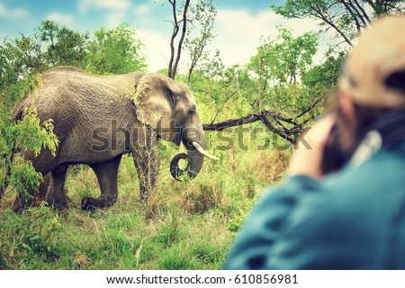 Photographer taking pictures of an African elephants, wild animal, safari game drive, Eco travel and tourism, Kruger national park, South Africa