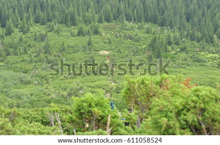 Ukraine, Carpathians, Chornohora Massif, alpine trail on the mountain Goverla #611058524