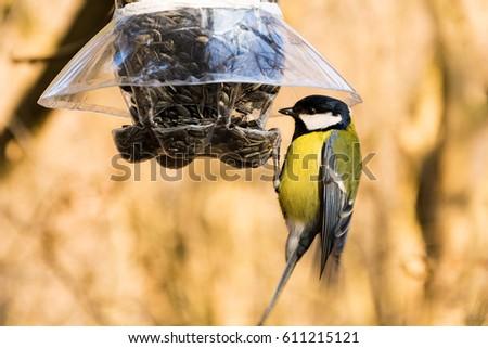 Great tit at a bird feeder #611215121
